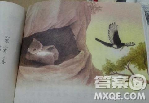 寒号鸟为什么不是鸟 寒号鸟是什么动物