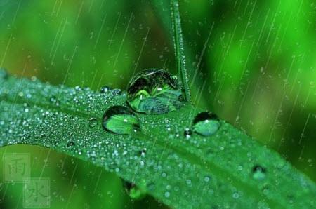听雨的心声为题作文600字 关于听雨的心声的作文600字
